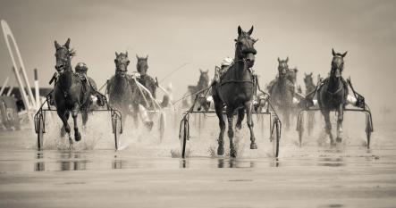 horserace-pexels-photo-802861-LinkedIn-version